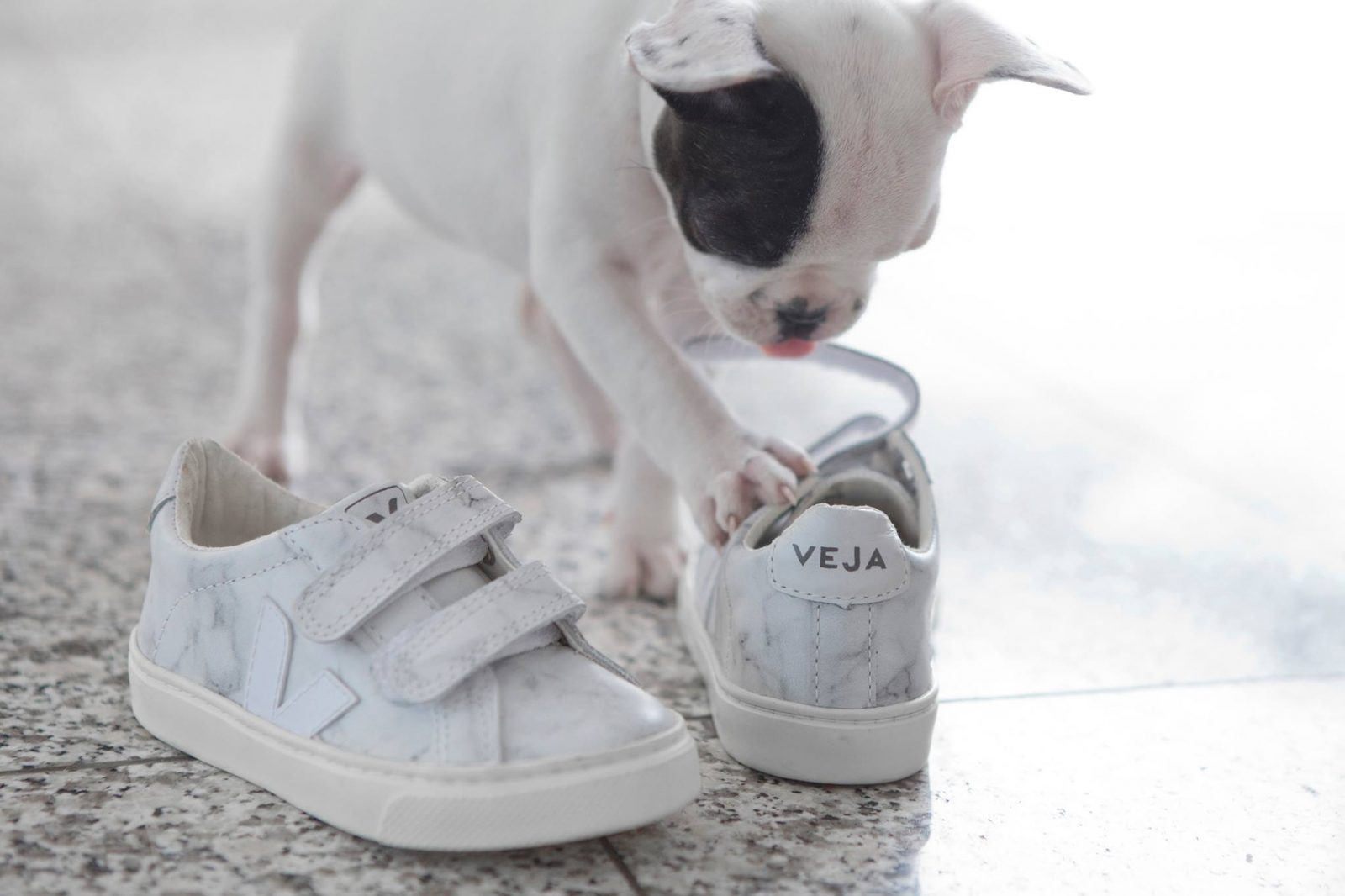 Veja Diapers and Milk collaborations sneakers marble esplar puppy
