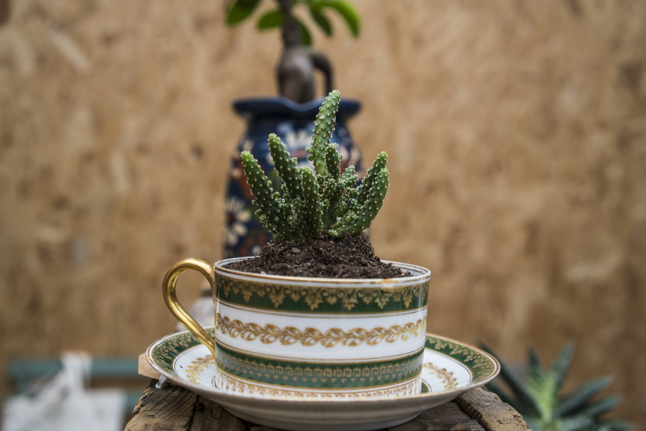 The Blond Cactus cup of tea