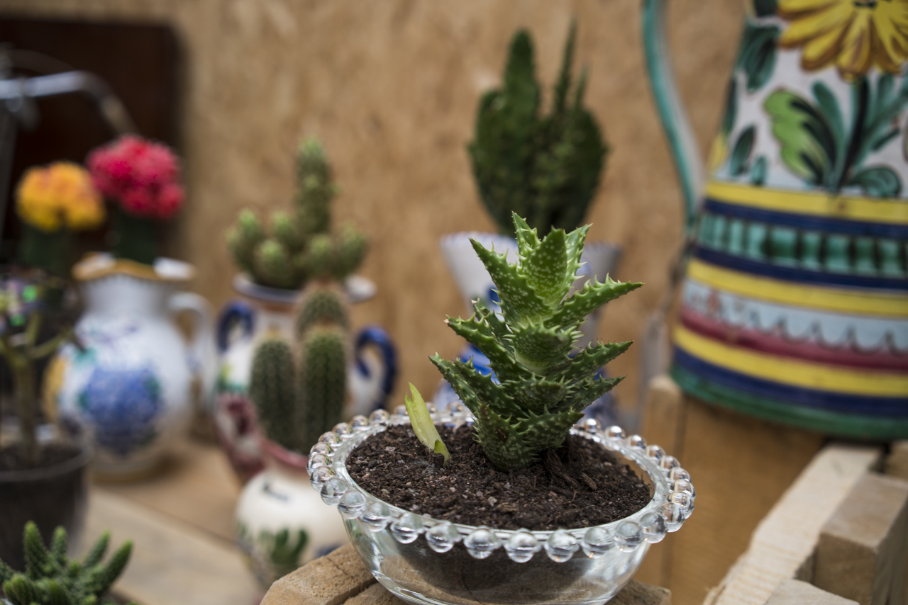 The Blond Cactus succulent made in France recycling