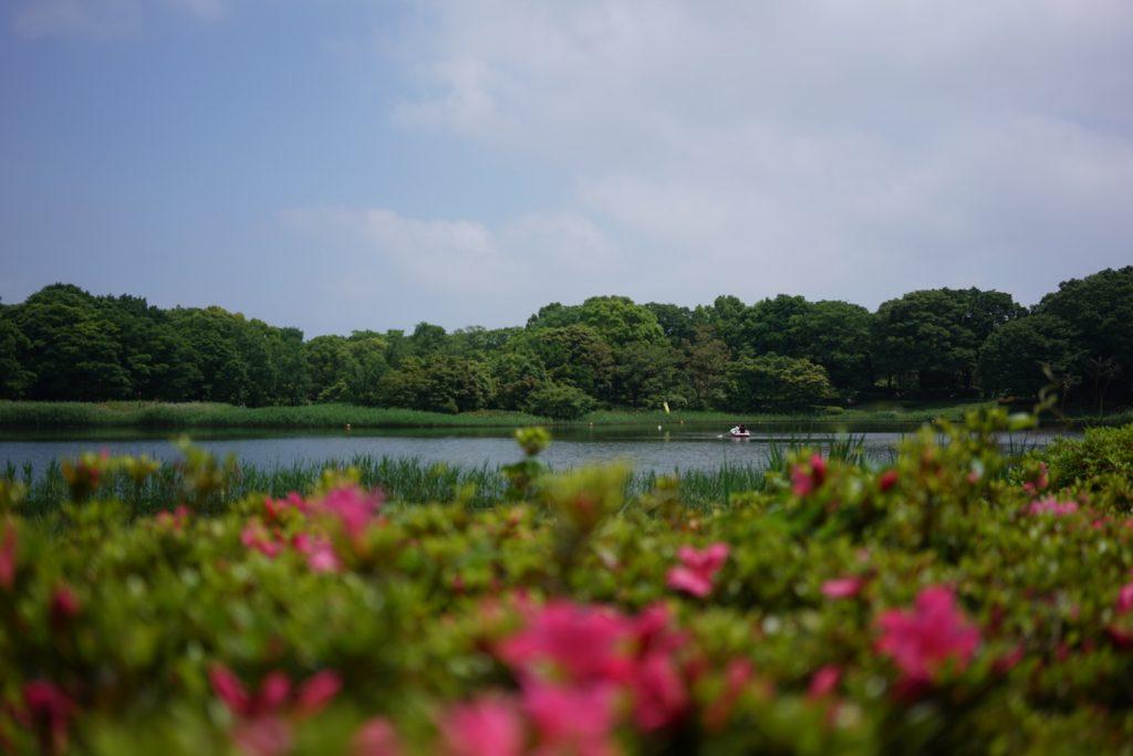 poppy field japan tokyo