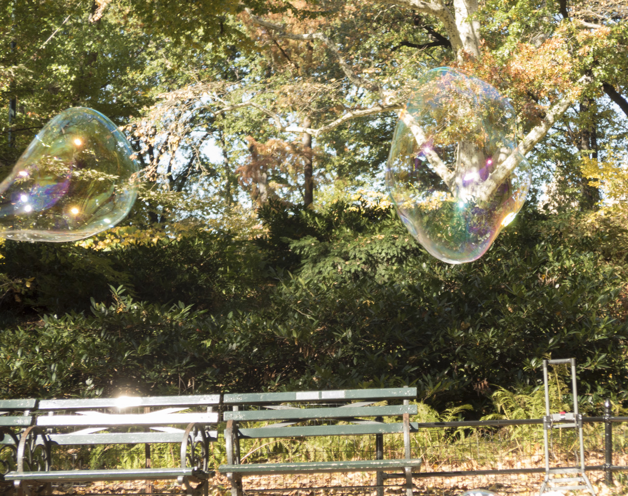 Transparence Bulle New York Central Park The New Wardrobe Mode éthique
